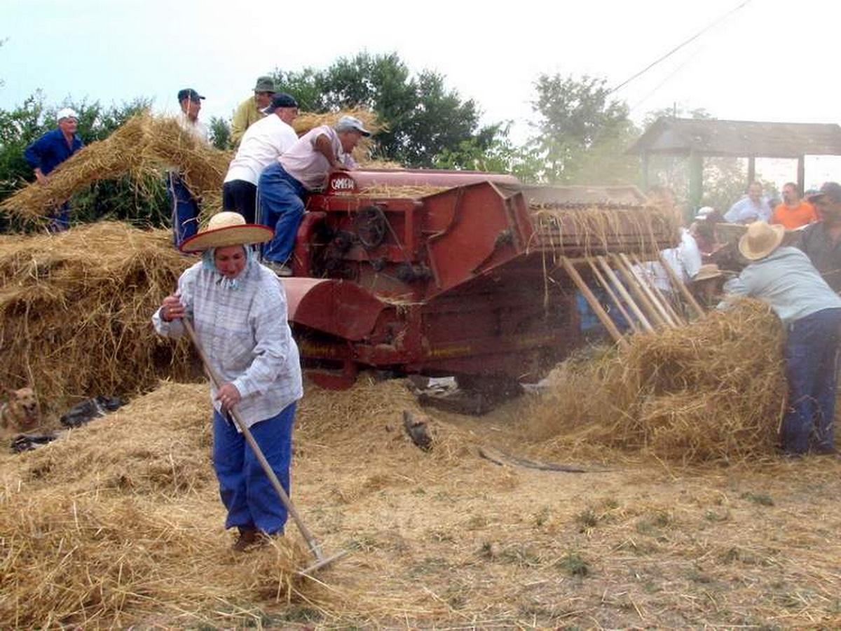 Proceso de elaboración del pan